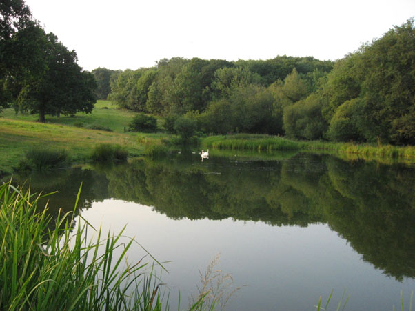 The original Great Mead pond, looking north with Coombe Wood on the right and Milking Hanger rising beyond. 623