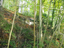 Here there are almost overhanging Greensand cliffs, looking like a built wall intertwined with beech tree roots. (224)