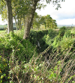 The sunken lane, recently cleared of scrub, is a footpath on the east side of the road, but only partly accessible in the sunken area.  (FP22 to Hartley Maudit, and FP24 to Wick Hill). 281