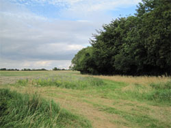 The northern end of Long Copse, hiding the steep bowl within. 356