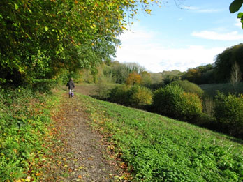 The Long Lythe, looking east along the Hangers Way. 240