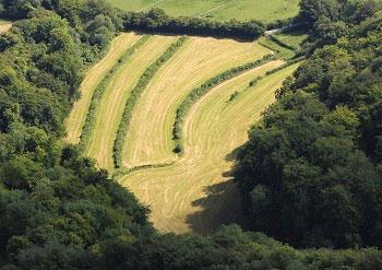 Peak Common Field 009
