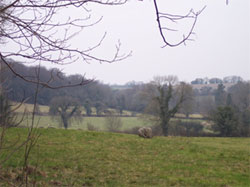 Sarsen stones in the upper area of the Park. 885.