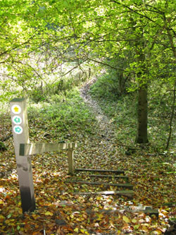 The recently restored path off the Short Lythe across Dortons. 231