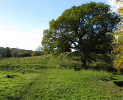 At the bottom. The old oak is reputedly the largest tree, by volume, in Selborne. The Hanger is in the background. 216 (summer view).
