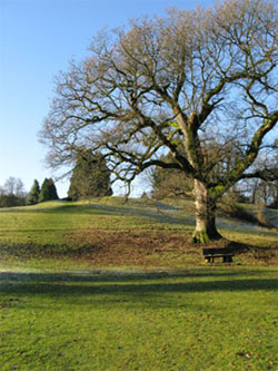 At the bottom. The old oak is reputedly the largest tree, by volume, in Selborne. The Hanger is in the background. 216 (winter view).