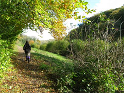 The view east, along The Long Lythe section of the Hangers Way. 237