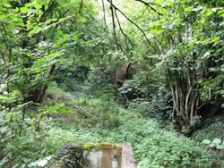 The Wellhead valley is overgrown. In the foreground is the original header tank for the Victorian water distribution system that fed the village.751