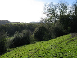 The south slope of Wick Hill looking down to Wick Wood. The Hangers Way path passes through the meadow at the bottom. 252